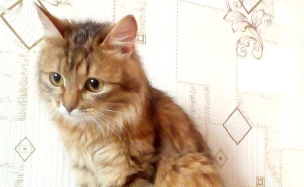 Кошке Асе нужен дом