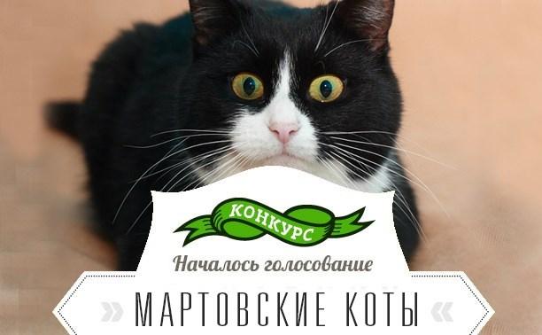 Возможно ли выбрать лучшего котика?