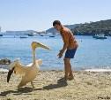 Пеликан,семейный фильм