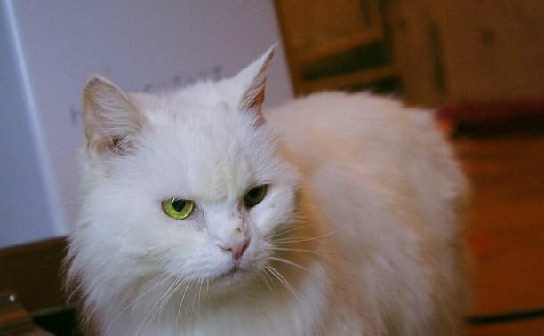 Кошке Соне нужен дом