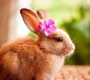 Кролики - это не только ценный мех!