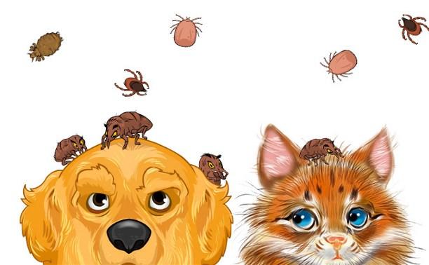 Как защитить любимую зверушку от нашествия паразитов (краткий обзор современных средств защиты).