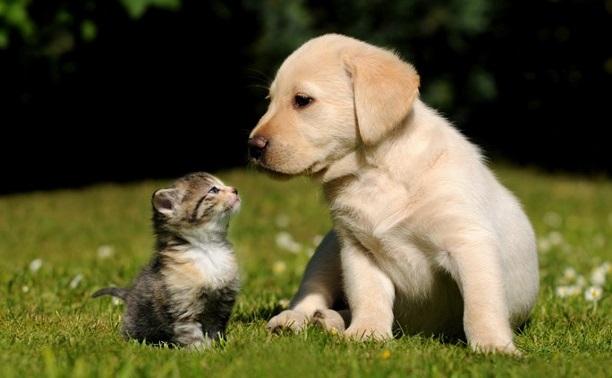 Делимся снимками милых щенков и котят!