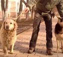 Найдены две собаки: овчарка и голден ретривер