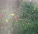 Гастробайтеры скосили цветы