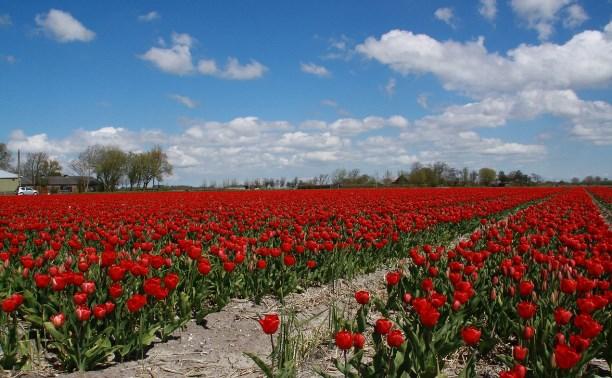 Завершился фотоконкурс «Весне дорогу!»