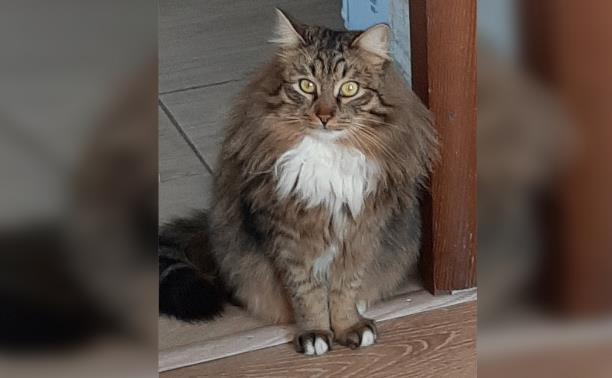 В Щекино пропал кот. Помогите найти!