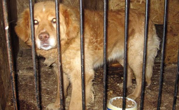 На Первомайской найден пёс