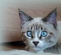 Голосуем за котиков!