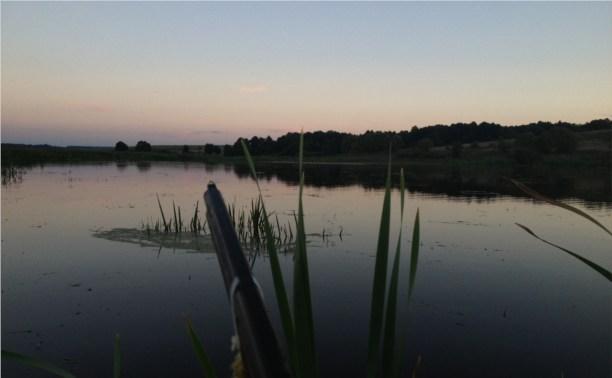 Охота! В Тульской области открыт сезон охоты на водоплавающую и болотную дичь!