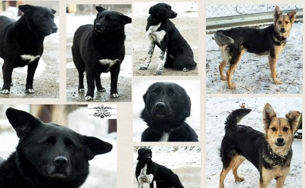 Пять прирученных собак срочно ищут дом!