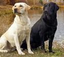 Стартовал фотоконкурс чёрных и белых животных