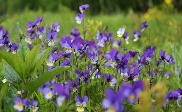 Яркие краски диких цветов...