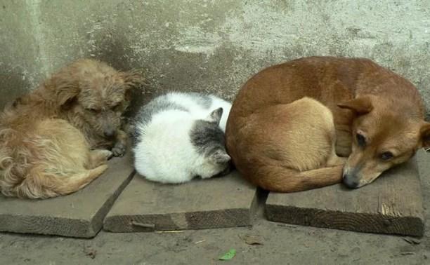 Что станет с бездомными животными Тулы?