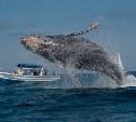 С тульским огнестрелом на китов