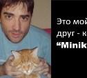 Кот по кличке Миник