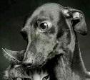 Большое переселение Таксы Рикки и кошки Сени Часть четвертая, финальная  Здравствуй Тула!
