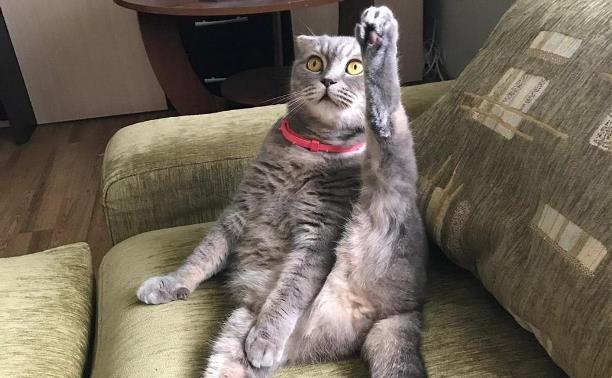 Выбираем понравившиеся кадры в фотоконкурсе «Пушистые котики»