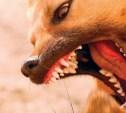 У соседей бойцовская собака