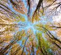 Myslo начинает новый фотоконкурс «Осенний лес»