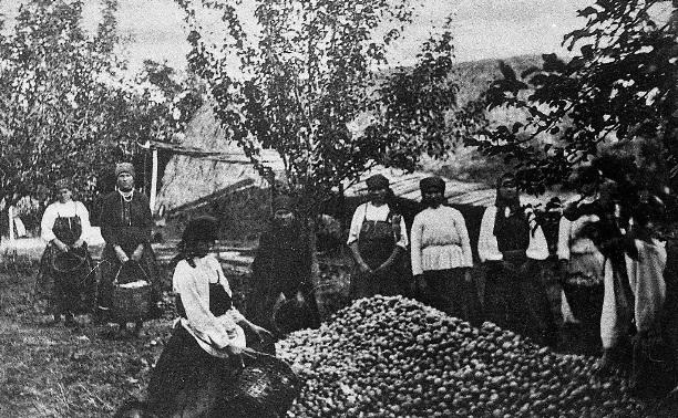 11 ноября: туляки ходатайствуют об охране Ясной Поляны
