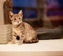 Филимон, Сабрина, Герда и другие котята в поисках счастья