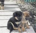 Ищем дом для щенков, спасённых от смерти