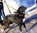 В Щекинском районе пропала собака. Помогите найти!