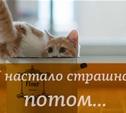 Про вкусную котятину и мужское супербельё