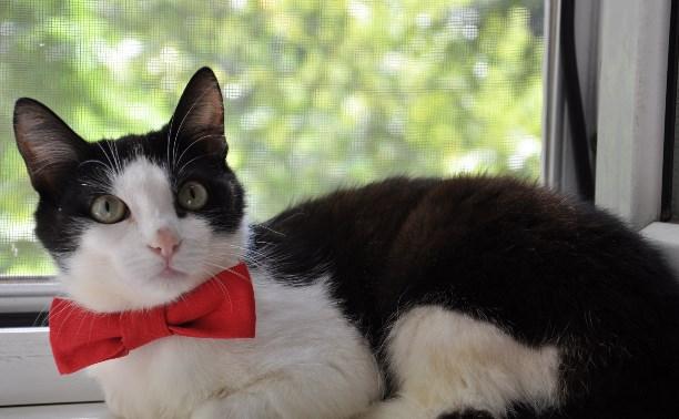 Кот Петя был спасён и теперь ищет дом
