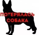 В районе Центрального рынка потерялась собака. Помогите найти!