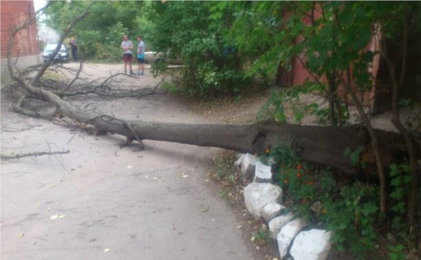 В Туле самопроизвольно упало дерево