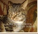 Из жизни кота: новая семья