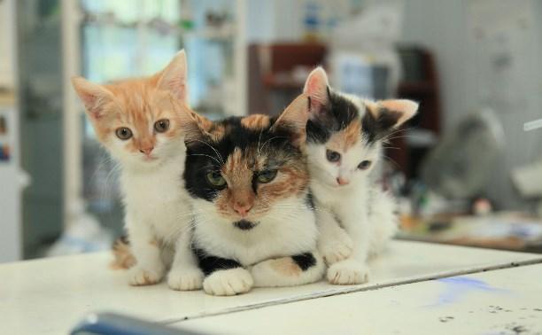 Четыре собаки и четыре кошки ищут дом