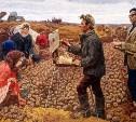 Как выращивать картофель!