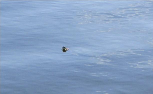 Черепахи в тульском парке. Думал байки. Нет, блин, быль..