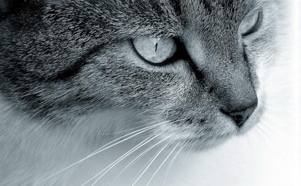 """Международная выставка кошек """"ПРЯНИЧНЫЕ КОШКИ"""" второй сезон"""