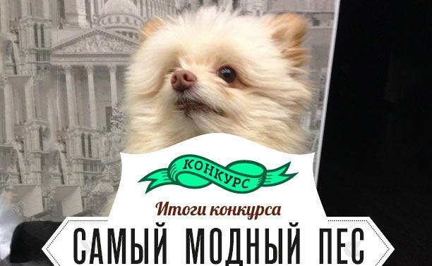 Поздравляем самого модного пса!