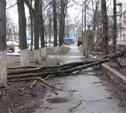На Циолковского на тротуар упало дерево