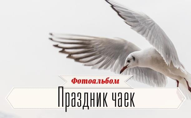 Приглашаются чайки и их друзья