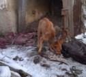 Истощенной собаке очень нужен дом!