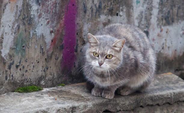На Зеленстрое в Туле найдена кошка