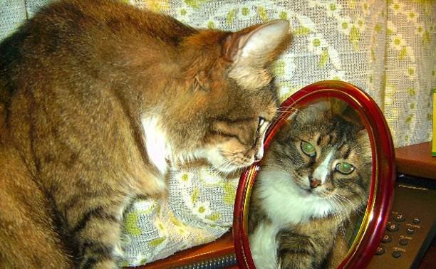 Завораживающие зеркальные отражения найдены: конкурс «Зеркала и отражения» завершен
