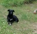Возле Кураково найден пёс. Ищем хозяев!