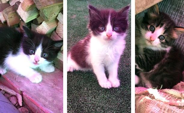Три котёнка ищут дом
