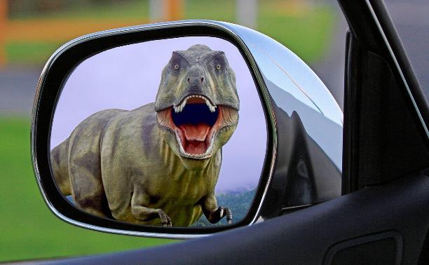 Участвуйте в новом фотоконкурсе Myslo: «Животные в отражении»