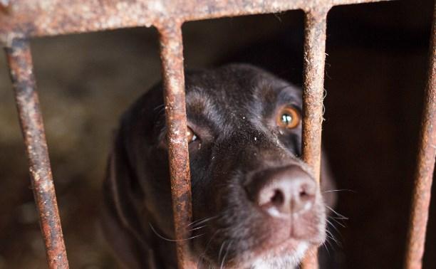 Собаки, участвующие в марафоне помощи животным центра «Любимец»
