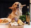 Готовый корм или натуральная еда? Чем кормить кошку и собаку