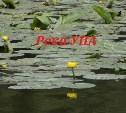 Знакомимся: Река УПА