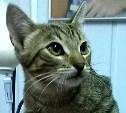 Кот-подросток Ёжик ищет себе хозяев